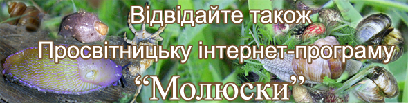 банер ПІП Молюски